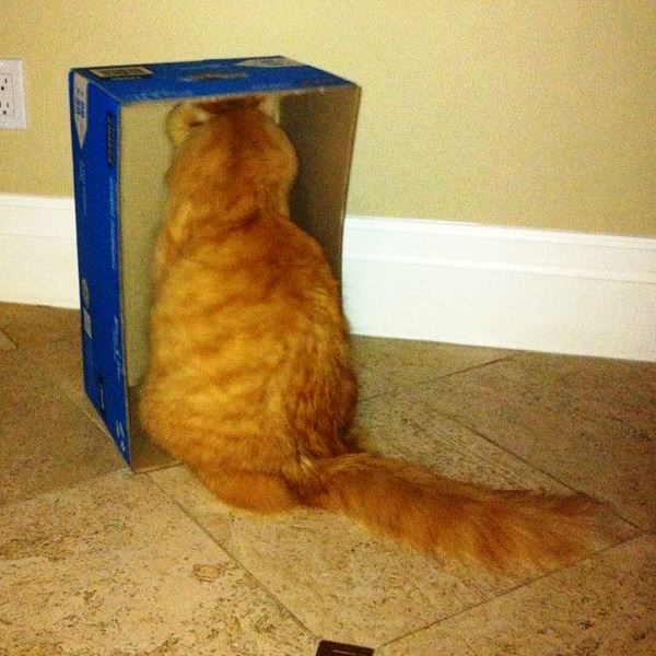 best-viral-pictures-of-week-cat-box