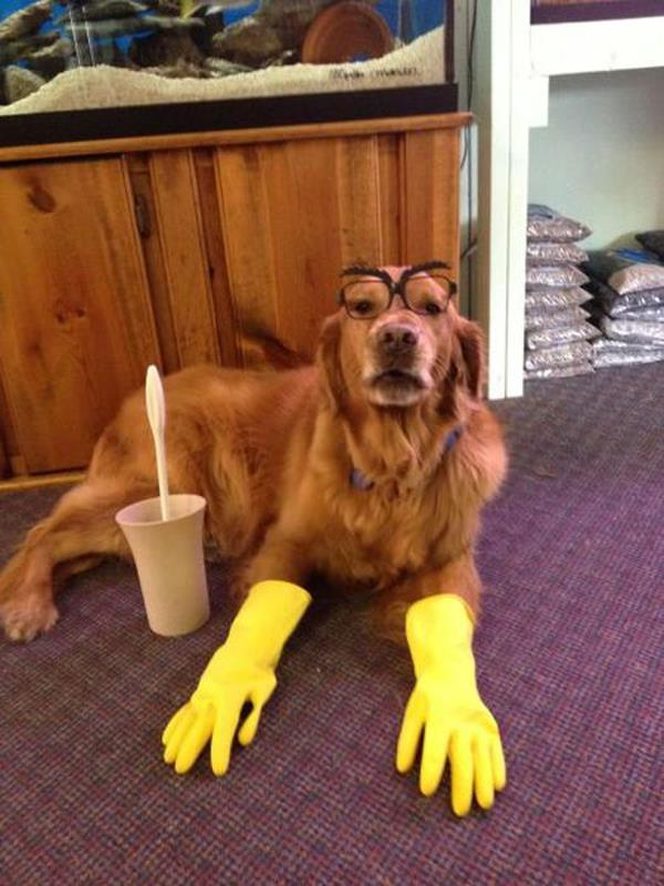 best-viral-pictures-of-week-dog-gloves
