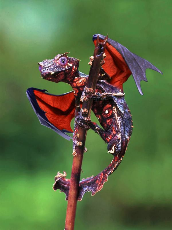 best-viral-pictures-of-week-dragon