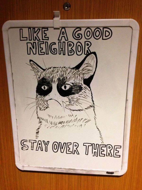 best-viral-pictures-of-week-grumpy-cat