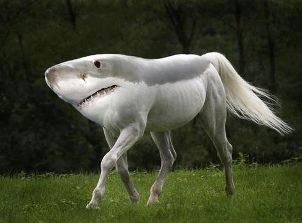 best-viral-pictures-of-week-shark-horse