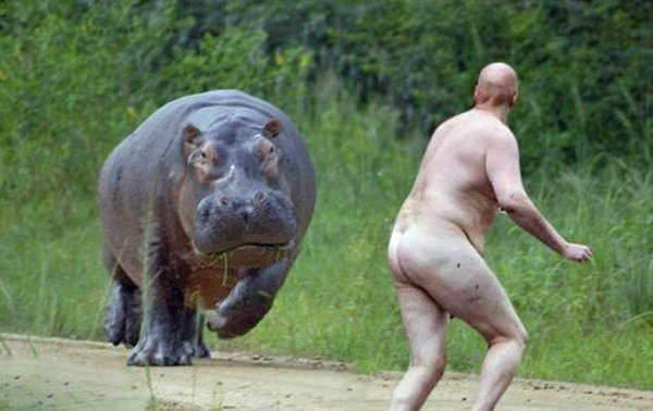 best-viral-pictures-week-5-hippo