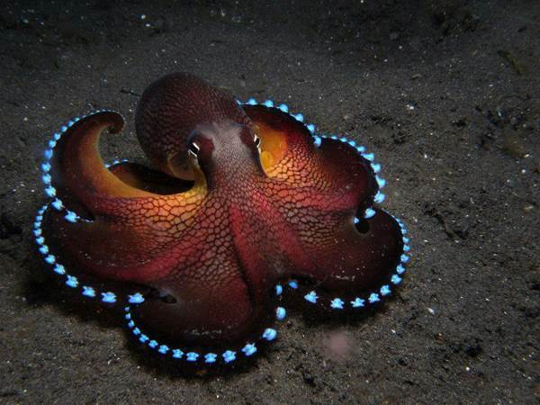 best-viral-pictures-week-5-octopus