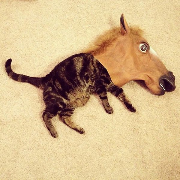 Cat Wearing A Horsehead