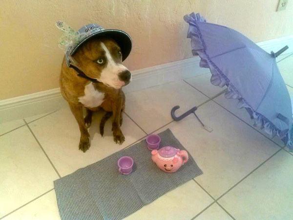 best-viral-pictures-week-dog