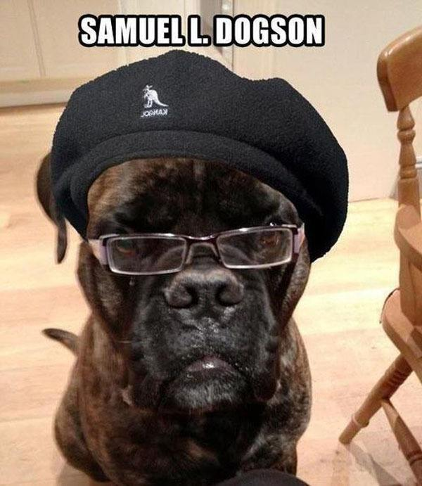 Samuel Jackson In Dog Form