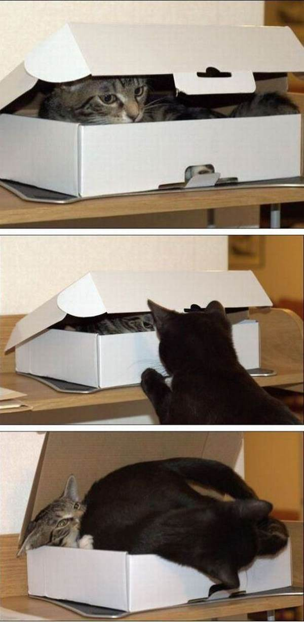 best-viral-pictures-week-6-cats