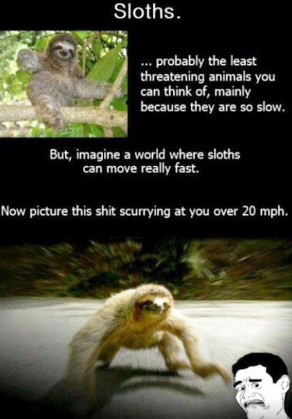best-viral-pictures-week-6-sloths