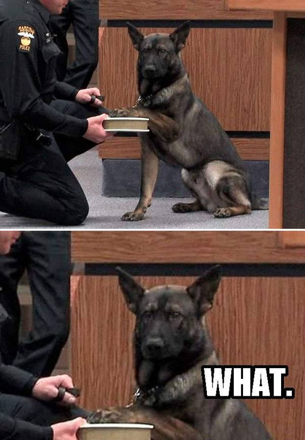best-viral-pictures-week-7-dogs