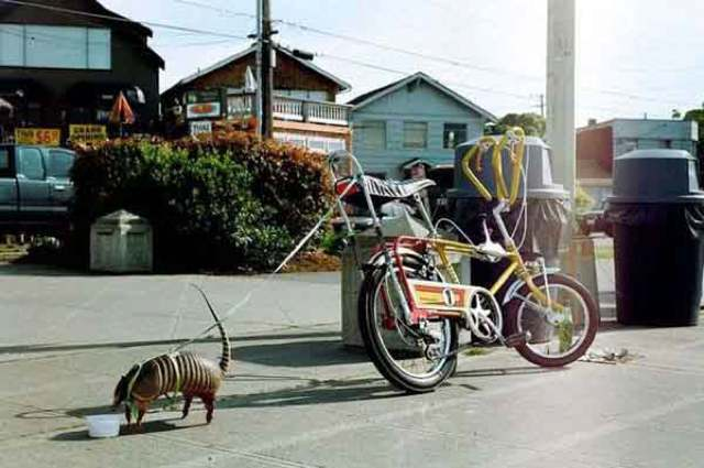 best-viral-pictures-week-8-armadillo