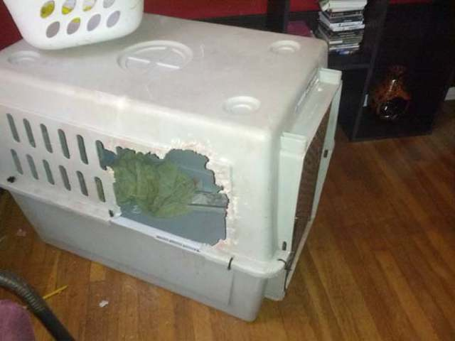 best-viral-pictures-week-8-crate