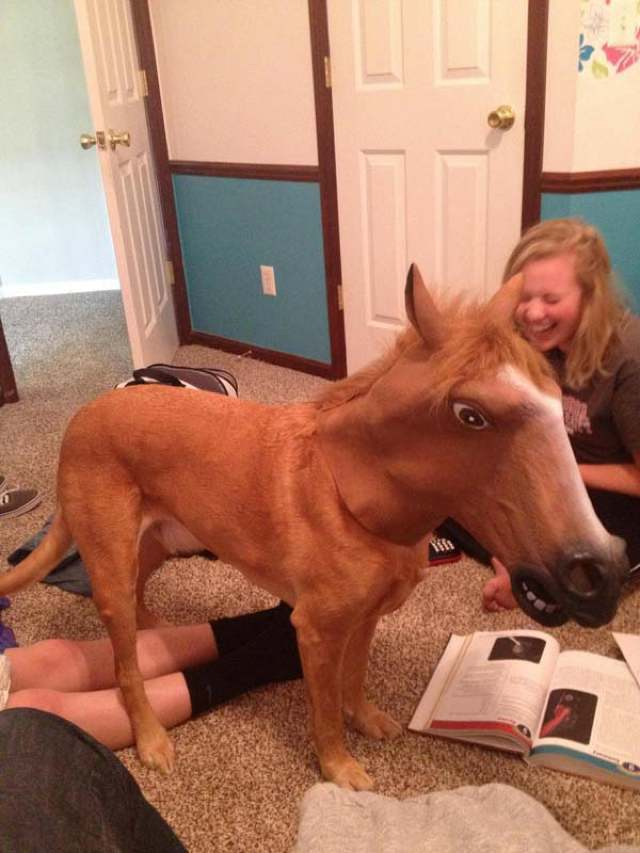 best-viral-pictures-week-8-horse