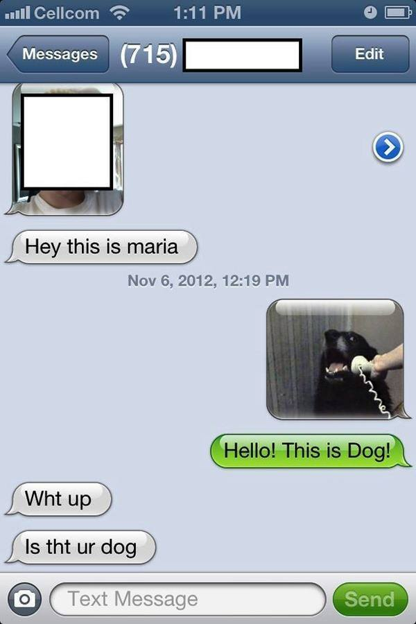 funniest wrong number texts dog
