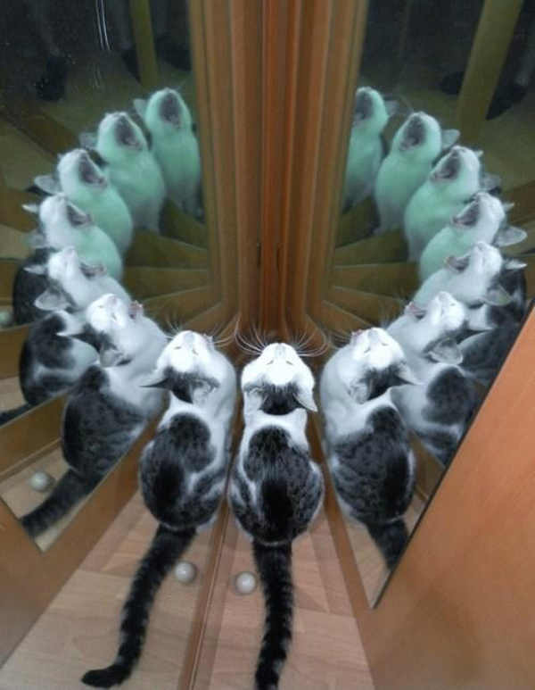 best-viral-pictures-10-cat