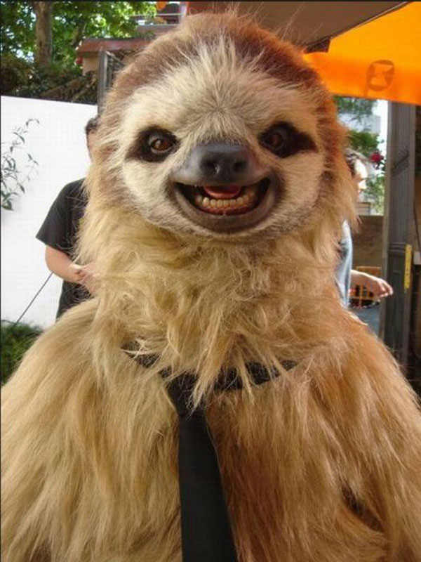 best-viral-pictures-10-sloth