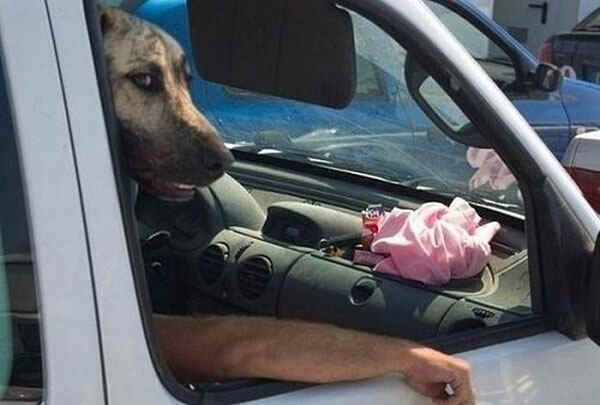 best-viral-pictures-11-dog
