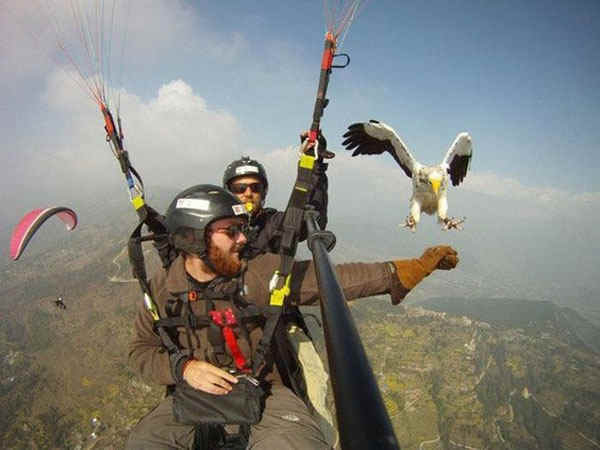 best-viral-pictures-11-eagle