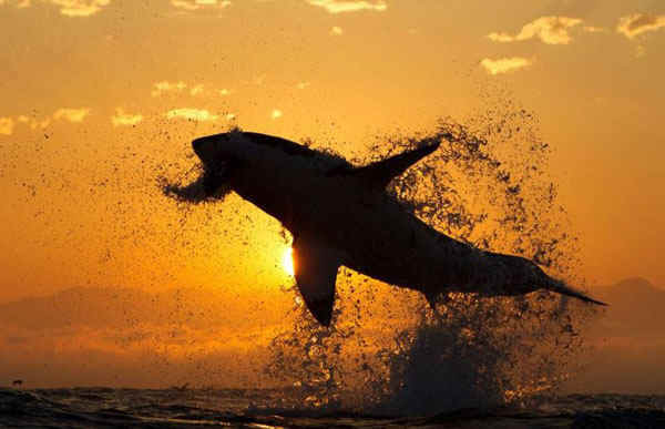best-viral-pictures-11-shark