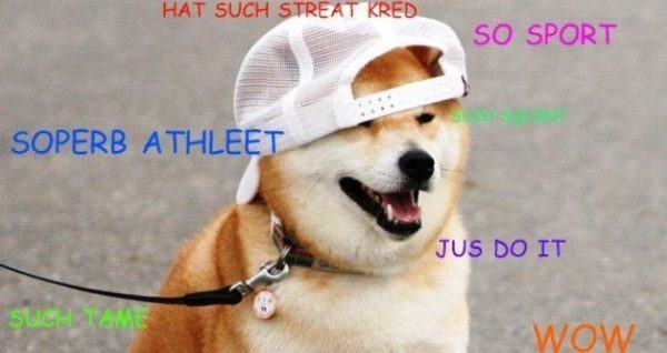 The best of the hilarious shibe meme solutioingenieria Images