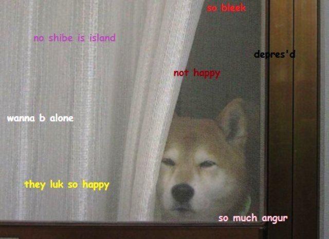 Shiba Inus Memes So Alone