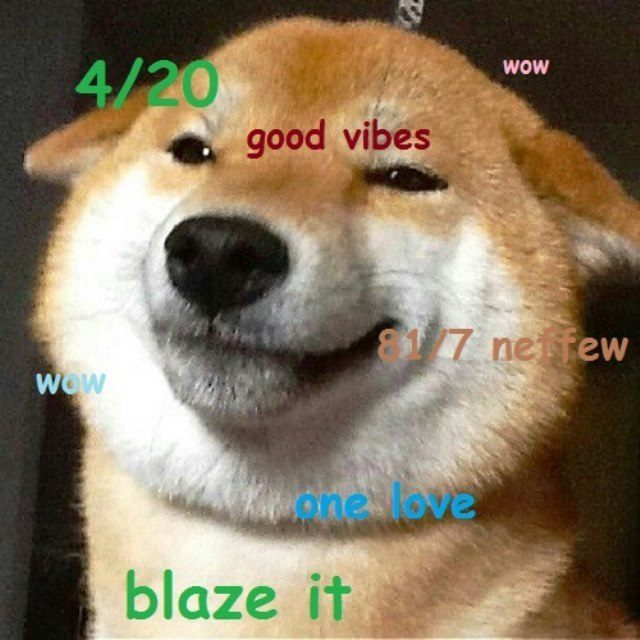 The Best Of The Hilarious Shibe Meme