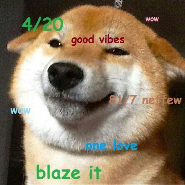 Shiba Meme Blazed