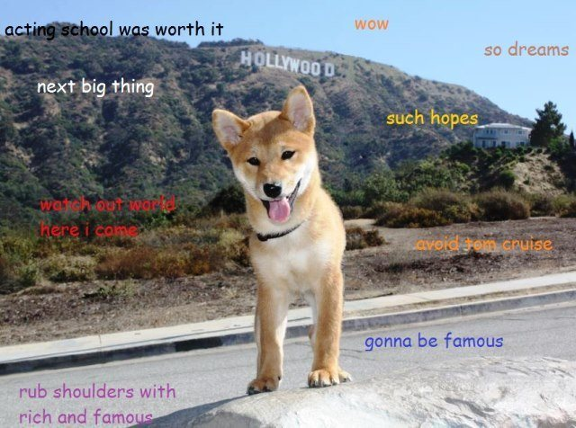 Shibe Meme In Hollywood