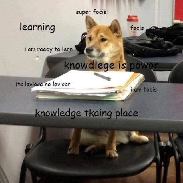 Shiba Inu Confessions Learning