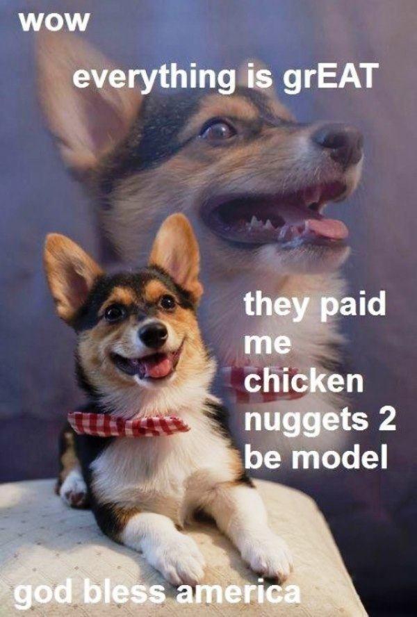Shiba Inu Meme Modeling
