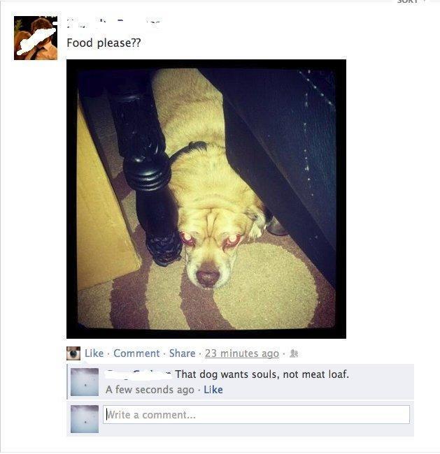 Exorcist Dog