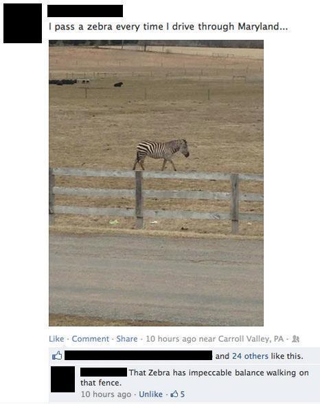 Best Facebook Comments