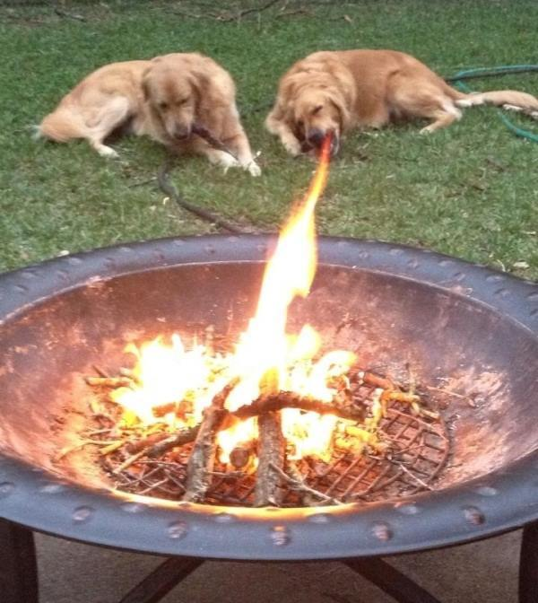 Perfect Timing Dog Fire