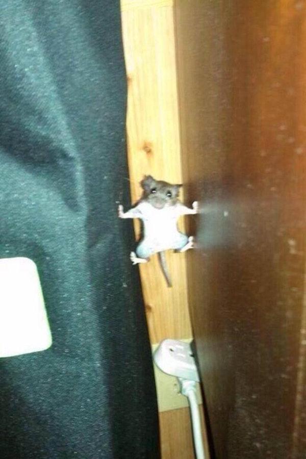 Mouse Crawl