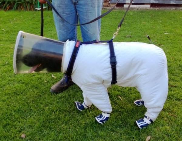 Dog Beekeeper
