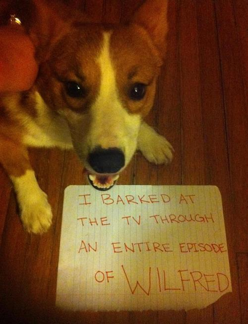 Dog Shaming Barking