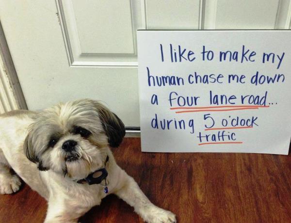 Chase Me Down Dog Shame
