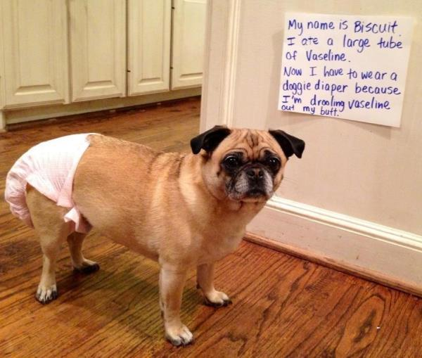 Doggie Diaper
