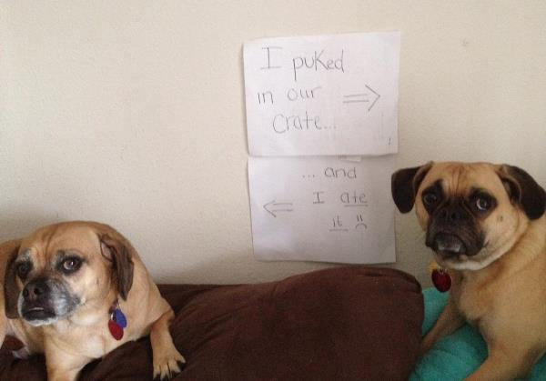 Dog Shaming Guilty Couple