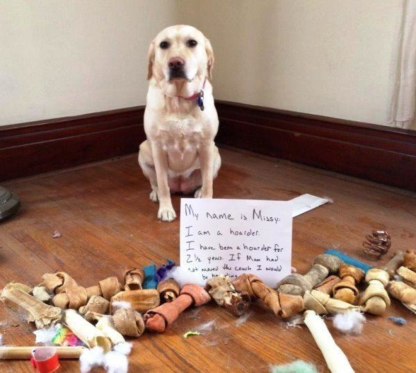 Dog Shaming Hoarder
