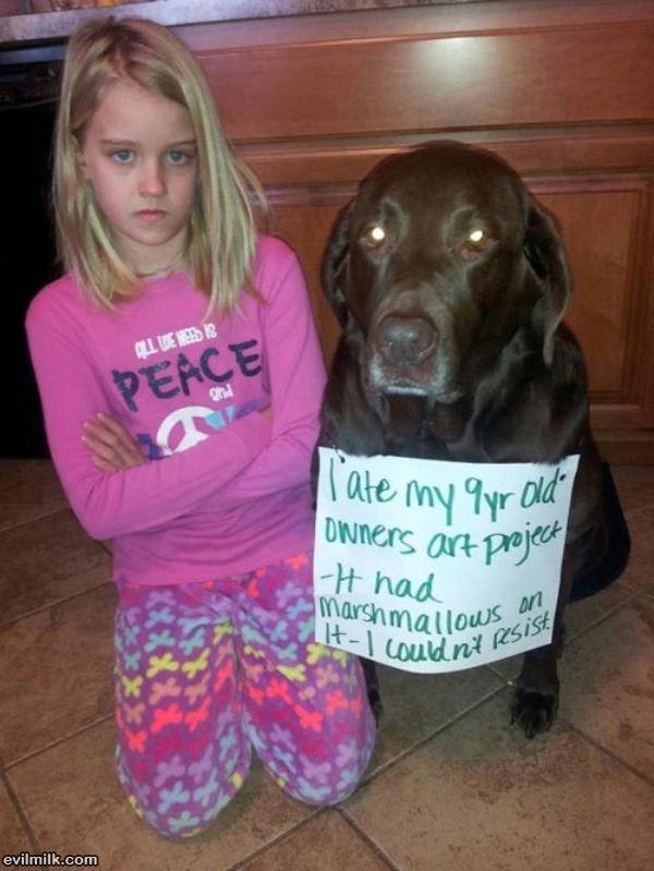 Dog Shaming Ate Homework