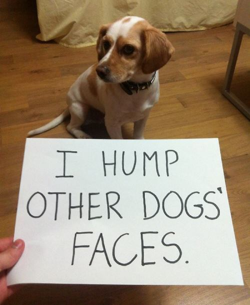 I Hump Other Dogs Faces