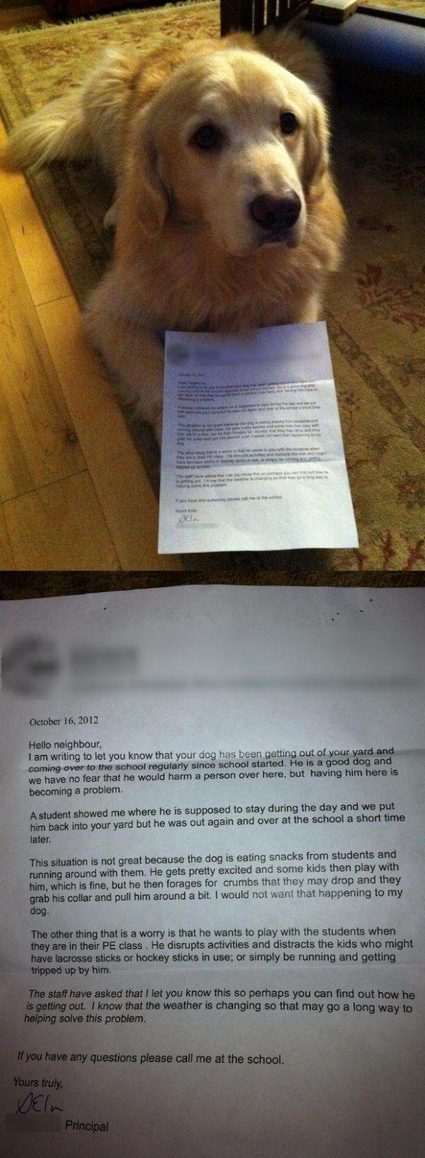 Dog Shaming Letter