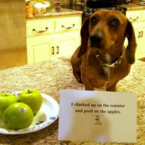 Dog Peed On Apples