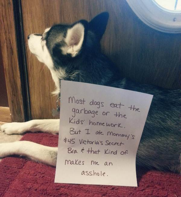 Dog Shaming Pictures Bra