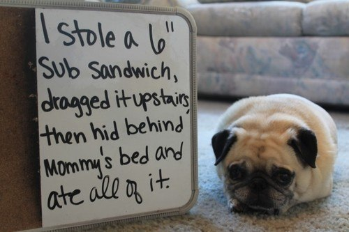 Dog Shaming Pictures Sub Sandwich