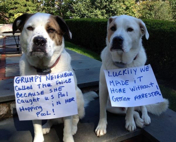 Dogs Getting Shamed For Sneaking Into A Pool