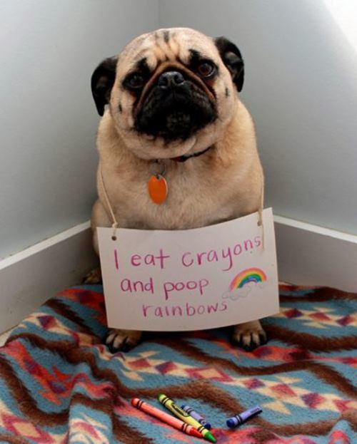 Dog Shaming For Poop Rainbows