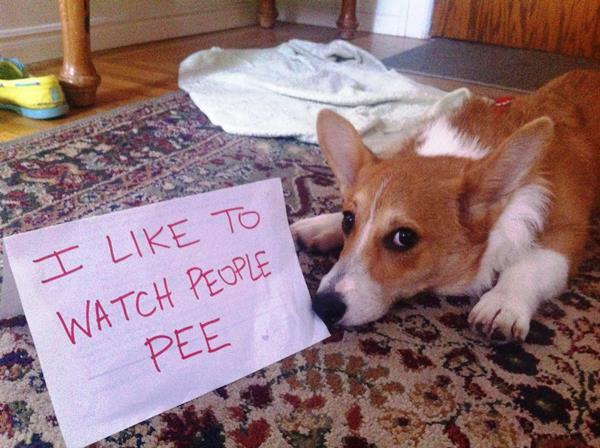 Dog Shaming Watch People Pee