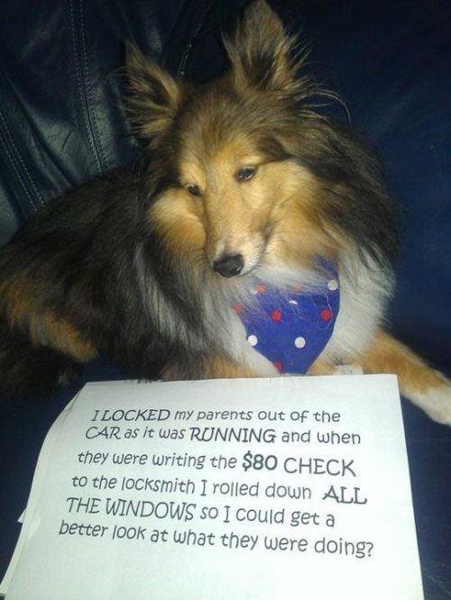 Dog Shaming Windows