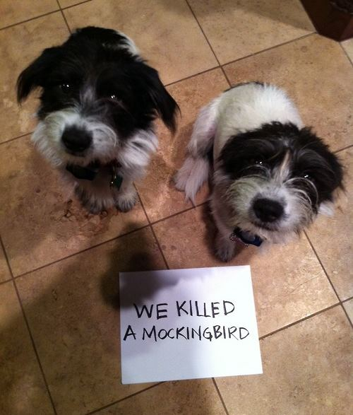 Dogs Ate A Mockingbird